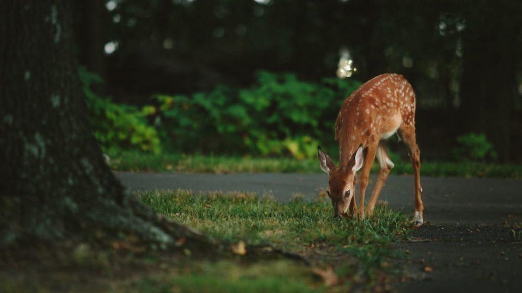 wildlife photography bangalore